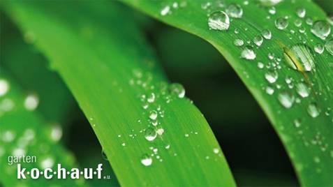 Homepage und Onlineshop im Responsive Design für Garten Kochauf Lieboch